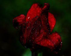 Rain by Maxine Simko on Capture My Vermont