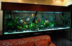 10ft Tropical aquarium with Discus... to start with.