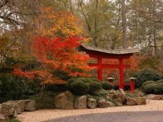 torii Gate in the Fall
