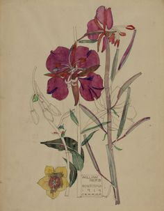 Willow Herb, Buxstead - 1919  Hunterian Art Gallery   Mackintosh collections: GLAHA 41012