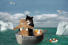 Este quiz de gatitos te dirá una verdad muy específica sobre ti