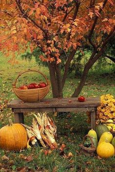 .Idea for welcome table-Let me sits her for awhile and reflect on this amazing season. #fall #autumn…