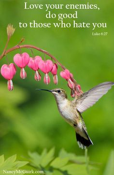 "Bible Verse - Luke 6:27 ""Love your enemies, do good to those who hate you."" NancyMcGuirk.com"