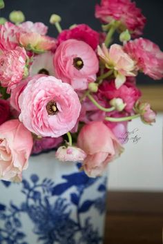 Ranunculus in blue and white porcelain