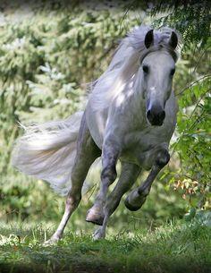 If Pietro Maximoff/Quicksilver was a horse