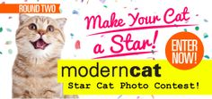 It's back! Enter your amazing cat in our Star Cat contest brought to you by Cloud 9 for cats. The winner will get a one page spread in an upcoming issue of Modern Cat magazine! Vote for all of your favourites and spread cat love! Enter your cat here: http://moderncat.com/starcat