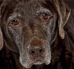 Senior Dogs Are Beautiful :) ♡... Re-pinned by StoneArtUSA.com ~ affordable custom pet memorials for everyone.