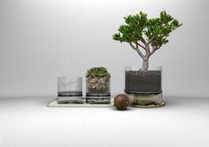 chậu trồng cây bằng thủy tinh