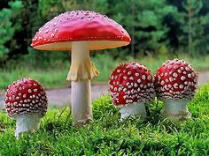 Amanita muscaria.  ️More Pins Like This At FOSTERGINGER @ Pinterest♓️