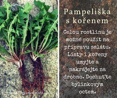 Pampeliškový kořen pro očistu těla Korn, Health Fitness, Herbs, Plants, Herb, Plant, Fitness, Planets, Health And Fitness