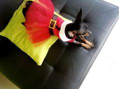 #vestidomascota #vestido #vestidonavidad Boston Terrier, Dogs, Animals, Christmas Dresses, Fashion Trends, Pets, Boston Terriers, Animales, Animaux