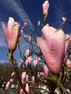Spring in #SnapWarrington