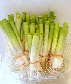 Garden Care, Edible Garden, Herb Garden, No Cook Meals, Agriculture, Celery, Food And Drink, Cooking, Green
