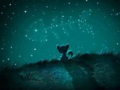What cats see in the stars