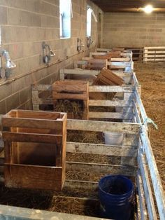 Kidding[/lambing] stalls, This is a heartwarming sight..