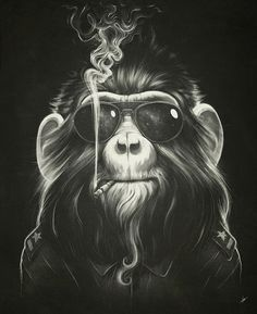 This one is a very funny picture. One chimpanzee is smoking. It looks very cool. Maybe he imagines he is playing Men in Black. I like is graphic because it draws many details about chimpanzee. The cimpanzee looks like real one.