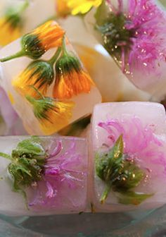 Calendula and Wild Bergamot flowers grace Schisandra-infused ice cubes. What a beautiful idea for a Spring special occasion! Just make sure the flowers are indeed edible and pesticide free. Flower Ice Cubes, Ice Cube Trays, Festa Party, Ice Ice Baby, Edible Flowers, Herbal Medicine, Fine Dining, Food Art, Catering