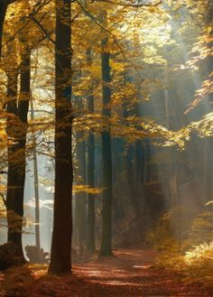 seasonalwonderment: Otoño