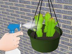 Grow Epiphyllum Cactus Step 6 Version 2.jpg