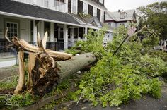 #Gardening Bad Trees for Hurricanes — Three Pitfalls to Avoid