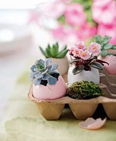 Green, Cheap and Practical Father's Day Gift Idea DIY Eggshell Potting