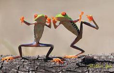 Лягушачья жизнь в фотографиях Шикеи Гоха (Shikhei Goh)