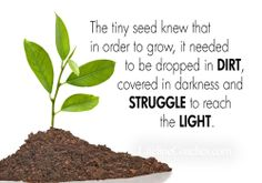 The tiny seed knew that in order to grow, it needed to be dropped in DIRT, covered in darkness and STRUGGLE to reach the light.