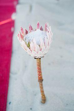 Cape Town Wedding by dna photographers Wedding Flower Arrangements, Floral Centerpieces, Floral Arrangements, Floral Wedding, Wedding Flowers, Wedding Dresses, Protea Flower, Single Rose, Wedding Details