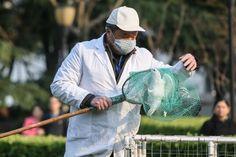 Hong Kong entra en alerta ante la propagación de la gripe aviar H7N9 en el este de China. http://www.farmaciafrancesa.com/main.asp?Familia=189