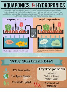 The Difference between Aquaponics and Hydroponics. Aquaponics is basically a form of hydroponics but by using fish waste as nutrients instead of hydroponic solution. plants aquaponics system The Difference between Aquaponics and Hydroponics