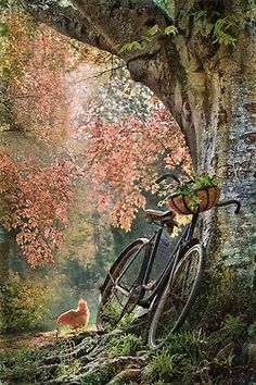 Ride a bike in the country.
