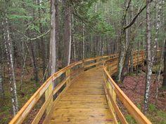 Boardwalk on the Mud Pond Trail on a rainy day.