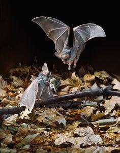 Incredible Bat Facts and Photos