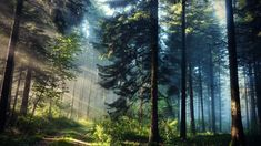Green forest wallpaper, landscape photography of a forest, trees, sun rays • Wallpaper For You HD Wallpaper For Desktop & Mobile