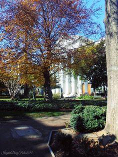 Edificio del ex Congreso Nacional de Chile y Sus Jardines Calle Bandera 46-52, Santiago Plants, Santiago, Antique Photos, Street, Buildings, Cute, Gardens, History, Flora