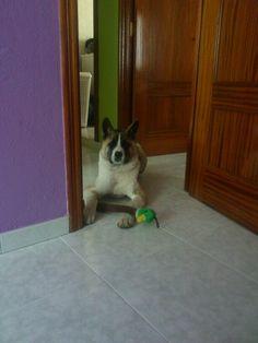 Mi perrina, que guapa!!