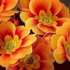 #Repost @paulsprague #awesome #Colors #Magic #Majestic #Dream #Dreamers #Serenity #Zen #Life #Live #Love #Light #Hope #Harmony #Horizons #Idyll #Imagine #Inspired #Incredible #Follow #PhotOfTheDay #Wonderland #Fairytale #Flowers