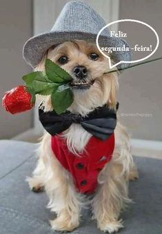 Healthy snacks for dogs on a diet menu food prices Happy Birthday Messages, Happy Birthday Images, Birthday Greetings, Animals And Pets, Baby Animals, Cute Animals, Funny Dogs, Cute Dogs, Funny Good Night Quotes