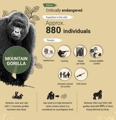 Endangered Animals In Africa, Endangered Species, Zoo Signage, African Rainforest, Elephant Habitat, Animals Information, Mountain Gorilla, Animal Activities, Welcome To The Jungle