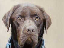 Burba by Jumprabbit on DeviantArt David Wells, Art Thou, Dog Paintings, Australian Artists, Amazing Art, Labrador Retriever, Deviantart, Dogs, Artwork