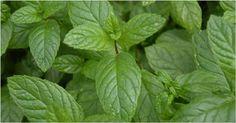 Uno de los remedios milenarios más efectivos para tratar la inflamación y el dolor, es el té de cúrcuma. ¡Entra aquí y aprende a prepararlo!