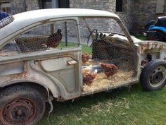 'chick magnet'