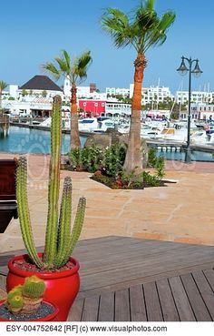 Lanzarote Marina Rubicon port at Playa Blanca in Canary Islands