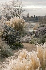 RHS Garden Hyde Hall in the frost