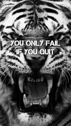 Wallpaper iphone quotes motivation motivational posters ideas for 2020 Tiger Quotes, Lion Quotes, Tiger Wallpaper Iphone, Laptop Wallpaper, Desktop Wallpapers, Pit Bull, Walpapers Iphone, Iphone Wallpaper Quotes Inspirational, Inspirational Quotes