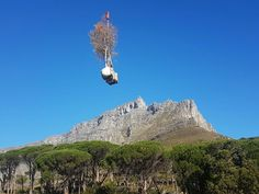 "Trees South Africa - Transporting trees ""over"" Table Mountain to their new rooftop home. Table Mountain, Cape Town, Rooftop, South Africa, Mount Everest, Trees, Mountains, Building, Projects"