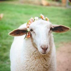 Today was full of tech issue after tech issue on the blog, so I did what any normal work from home/goat lady would do -- I stopped everything and took pictures of my lambs with flower crowns.