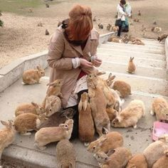 The Daily Cute: So. Many. Bunnies.