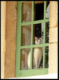 CAT IN WINDOW (This is sooo my Mz. Misty!!  She was so perfect!!!)