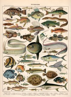 Fish Antique Print 1897 Vintage Lithograph Poisson door Craftissimo